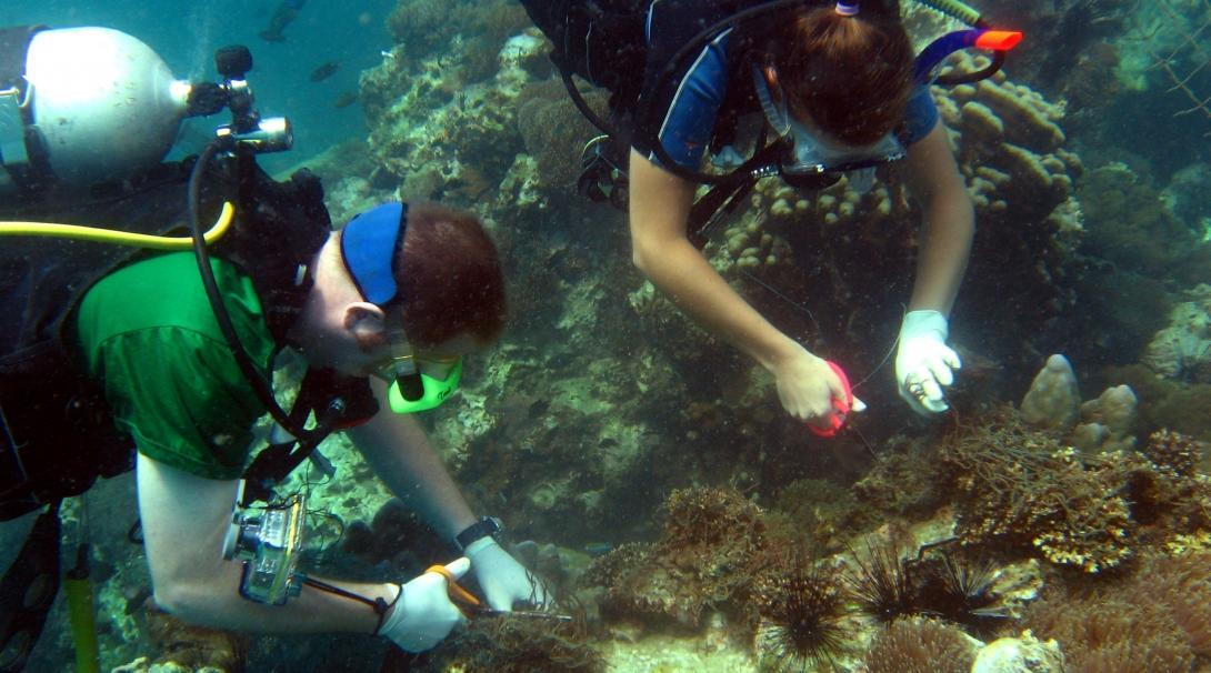 Two volunteers are seen diving and collecting samples whilst on their marine conservation work in Thailand with Projects Abroad.